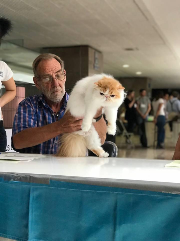 Tishacats - shows23