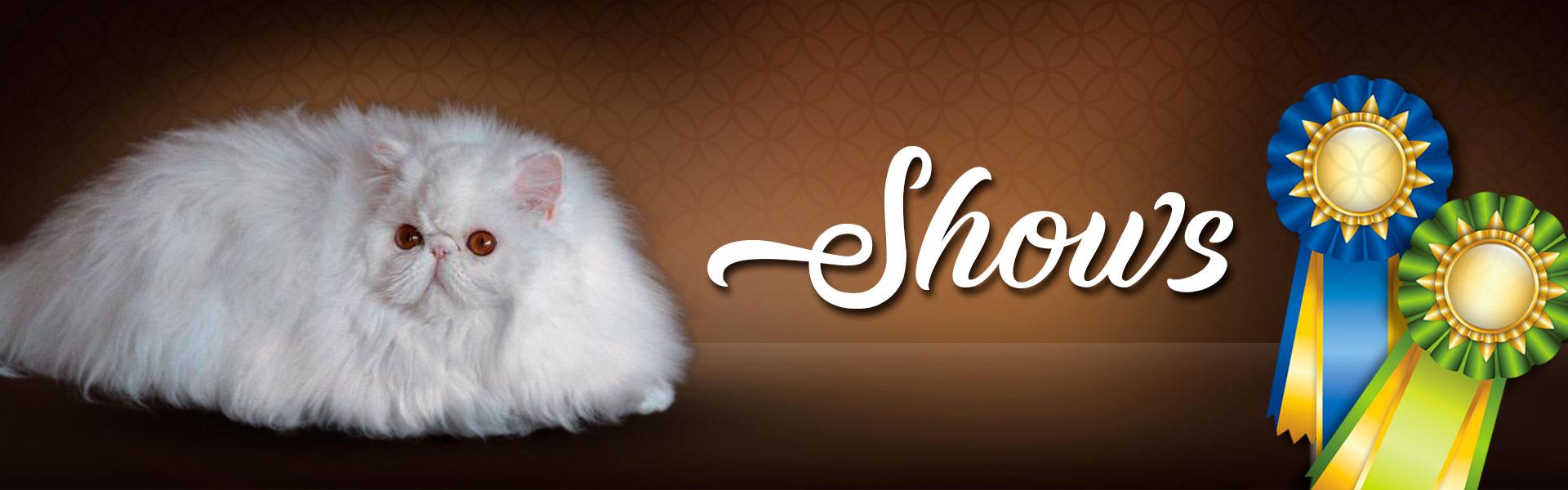 Tishacats - Shows