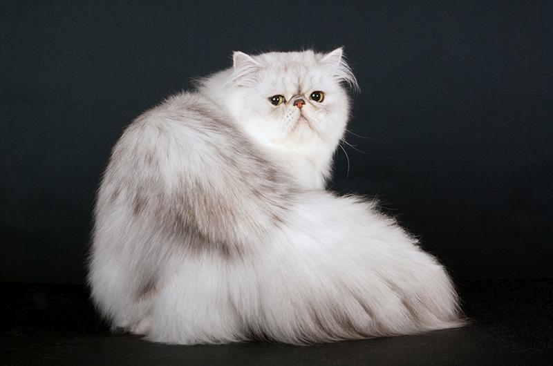 tishacats-ahumado